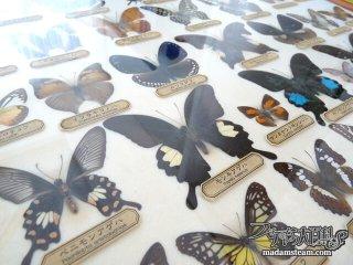 永遠の理科少年少女へ! 蝶の標本と生物部の思い出と学研の図鑑と