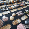 ああ、素晴らしき和名の世界! 貝の標本箱を手作りしてみました