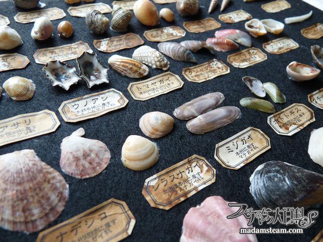 「貝の標本箱」 素晴らしき和名の世界