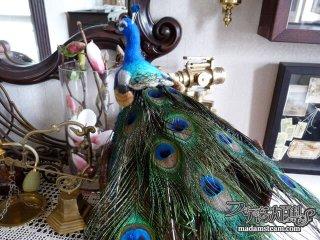 本物そっくりの鳥のオブジェ・私の書斎のカラフルな鳥たち