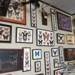 額を壁一面に美しく飾る方法・博物学的標本インテリア
