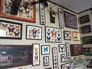 額(フレーム)を壁一面に美しく飾る方法・博物学的な蝶の標本インテリア