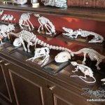 「玩具の骨格標本」DIYでブンダーカンマーの装飾品作り