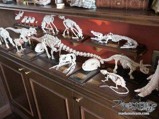 おもちゃの骨格標本を塗装して驚異の部屋(ヴンダーカンマー)を目指す