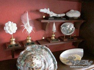 博物学的貝の標本スタンド・海の思い出を美しく飾りましょう
