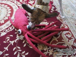 犬まっしぐらのおもちゃ・大きなダイオウイカぬいぐるみを作りました