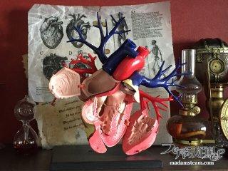 4Dmasterの心臓模型と私の驚異の棚(ワンダーキャビネット)