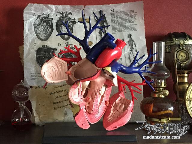 驚異の棚(ワンダーキャビネット)の心臓模型