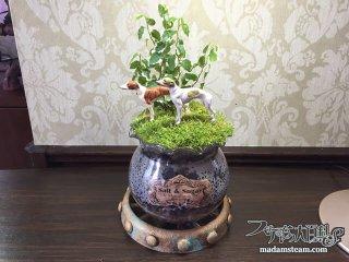植物と一緒にフィギュアを飾ってみよう(サギナ・フィカスプミラ)