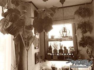 ホームズも夢中? ヴィクトリア朝の植物ブームとウォードの箱