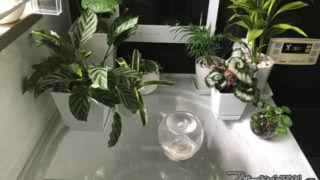 簡易バストレイ・浴槽にアクリル板を乗せました【お風呂改造記2】