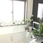 お風呂をジャングルにしよう! 浴室で育てる観葉植物【お風呂改造記3】