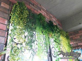 窓辺に人工観葉植物を飾ってみませんか? アーティフィシャルプランツの勧め