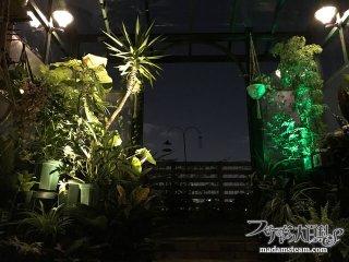 ソーラーLEDで電気代ゼロ円! 庭と温室の簡単ライトアップ法