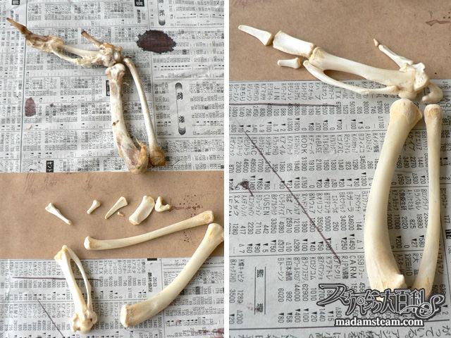 手羽先の骨格標本