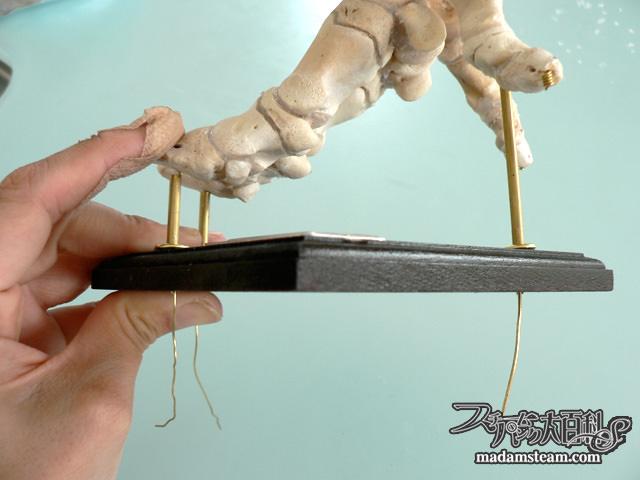 豚足の骨格標本