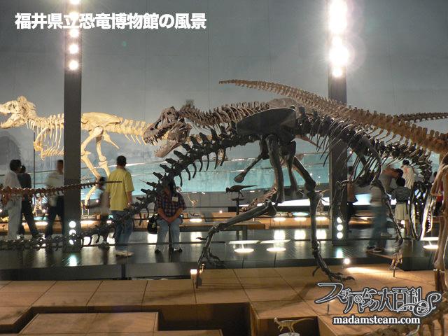 荒木一成・恐竜骨格標本