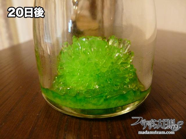 クリスタル栽培キット【Wish Flower】