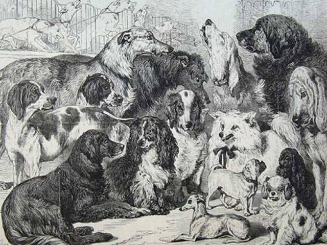 ヴィクトリア朝の犬