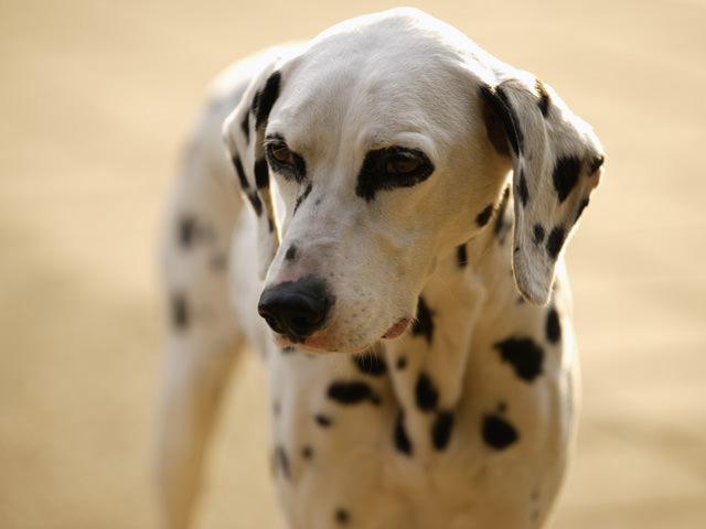 犬を飼うこと