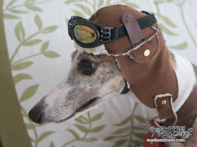 Steampunk dog