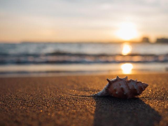 貝の標本の作り方