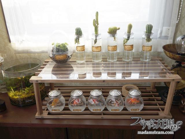 サボテンの水栽培