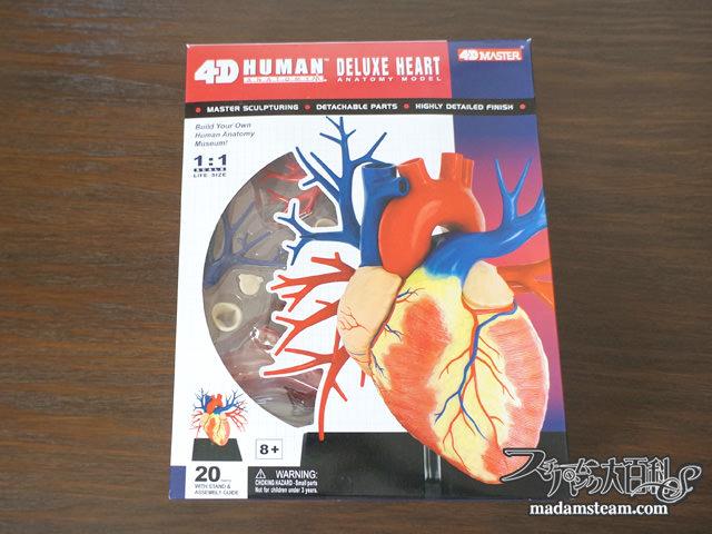 心臓の模型
