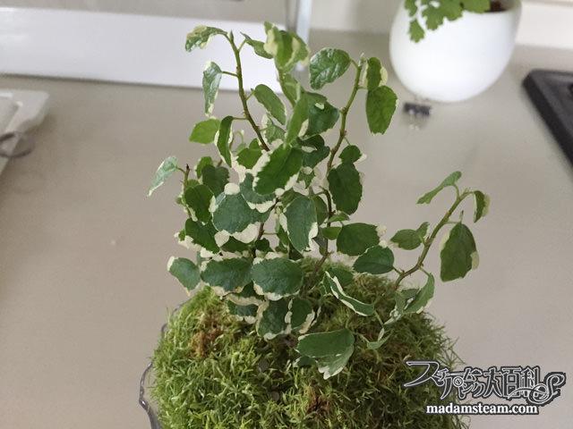 植物とフィギュア(サギナ・モフリッチ)