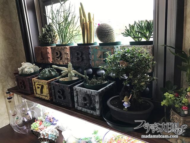 ヴィクトリア朝の植物ブームとウォードの箱