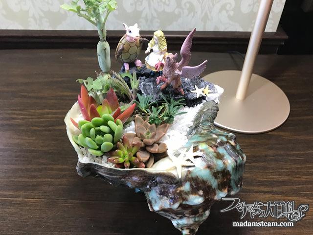 貝殻の植木鉢と多肉植物の寄せ植え