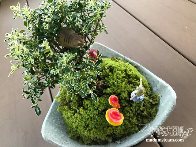 盆栽の国のアリス
