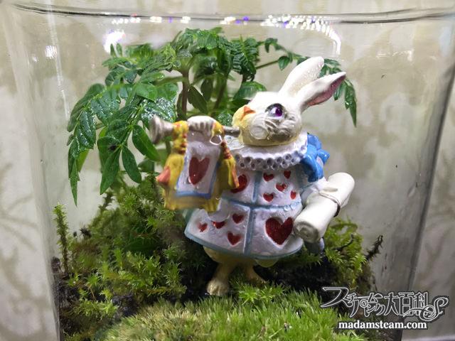 キャンディポットと白ウサギのテラリウム