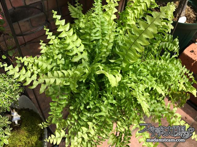 お風呂で観葉植物