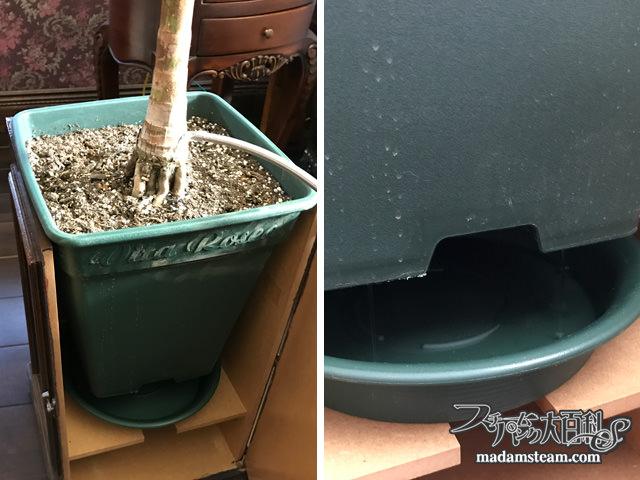ヤシの木のヴィクトリアン鉢カバー