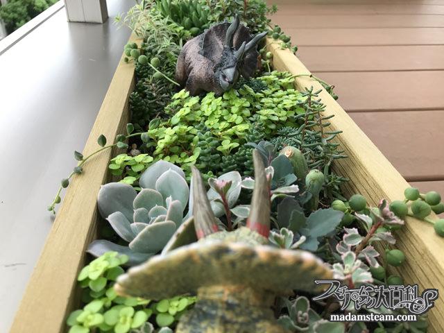 多肉植物のトリケラトプスガーデン1