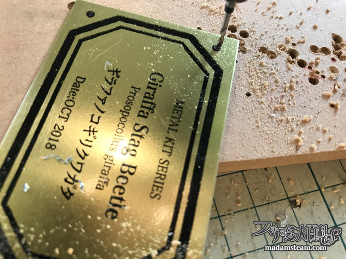 メタルキット昆虫と金属プレート実験