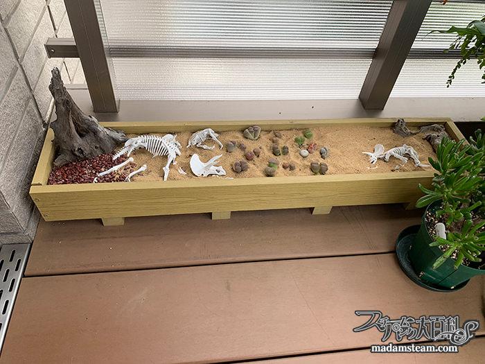 多肉植物とセダムのトリケラトプスガーデン