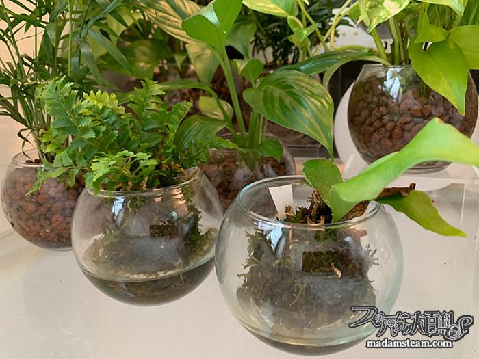 お風呂の植物とライト