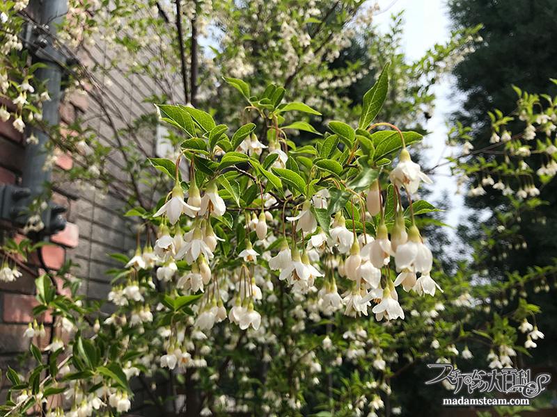 蒸気の庭の春夏秋冬