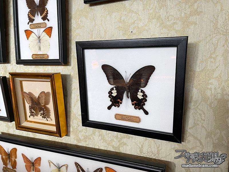 私の蝶コレクション